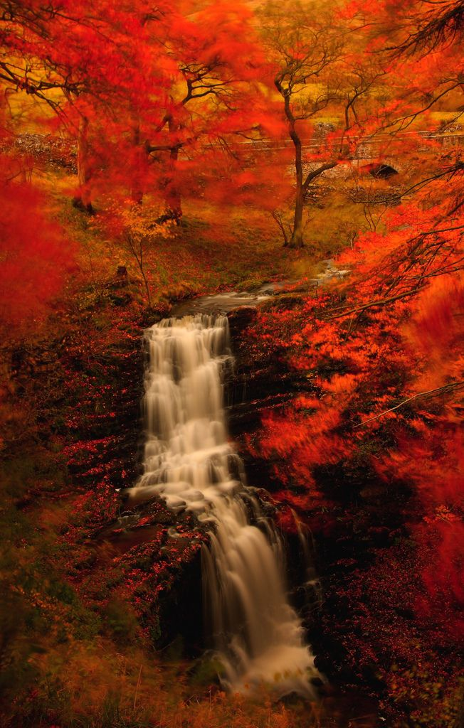 'Scaleber Force in Autumn' - Yorkshire Dales. (by Steve Thompson images)