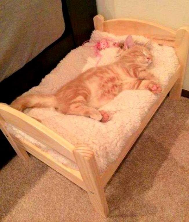 Dulces sueños !!!