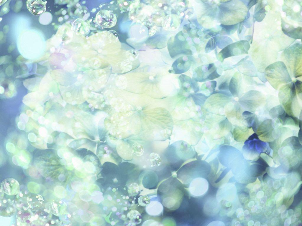 Ipad Wallpaper Little Plant In A Bubble: Hydrangea Flowers, Sunlight, Sparkling