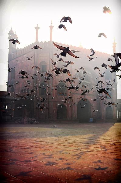 outside the Jama Masjid, in Old Delhi, India  (via blazenpearls)