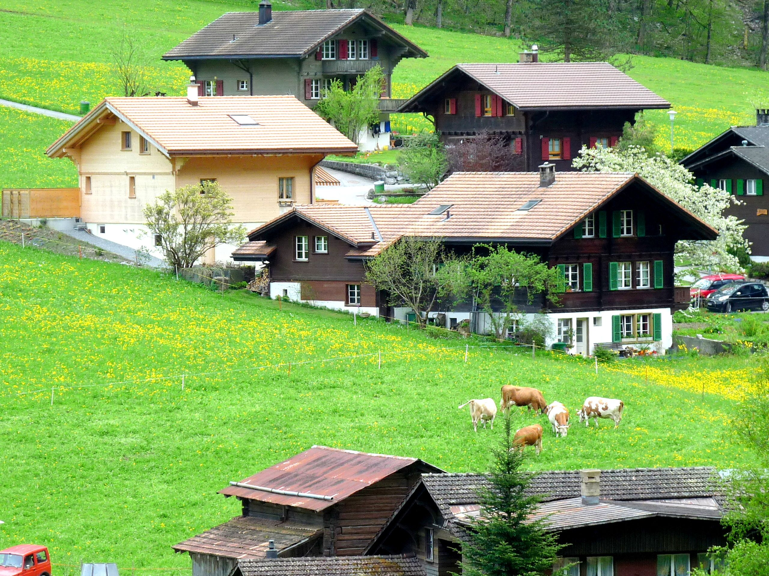 You Did Not Visit Switzerland If You Did Not Have A Cow Shot Vacation Pictures House Styles Visit Switzerland