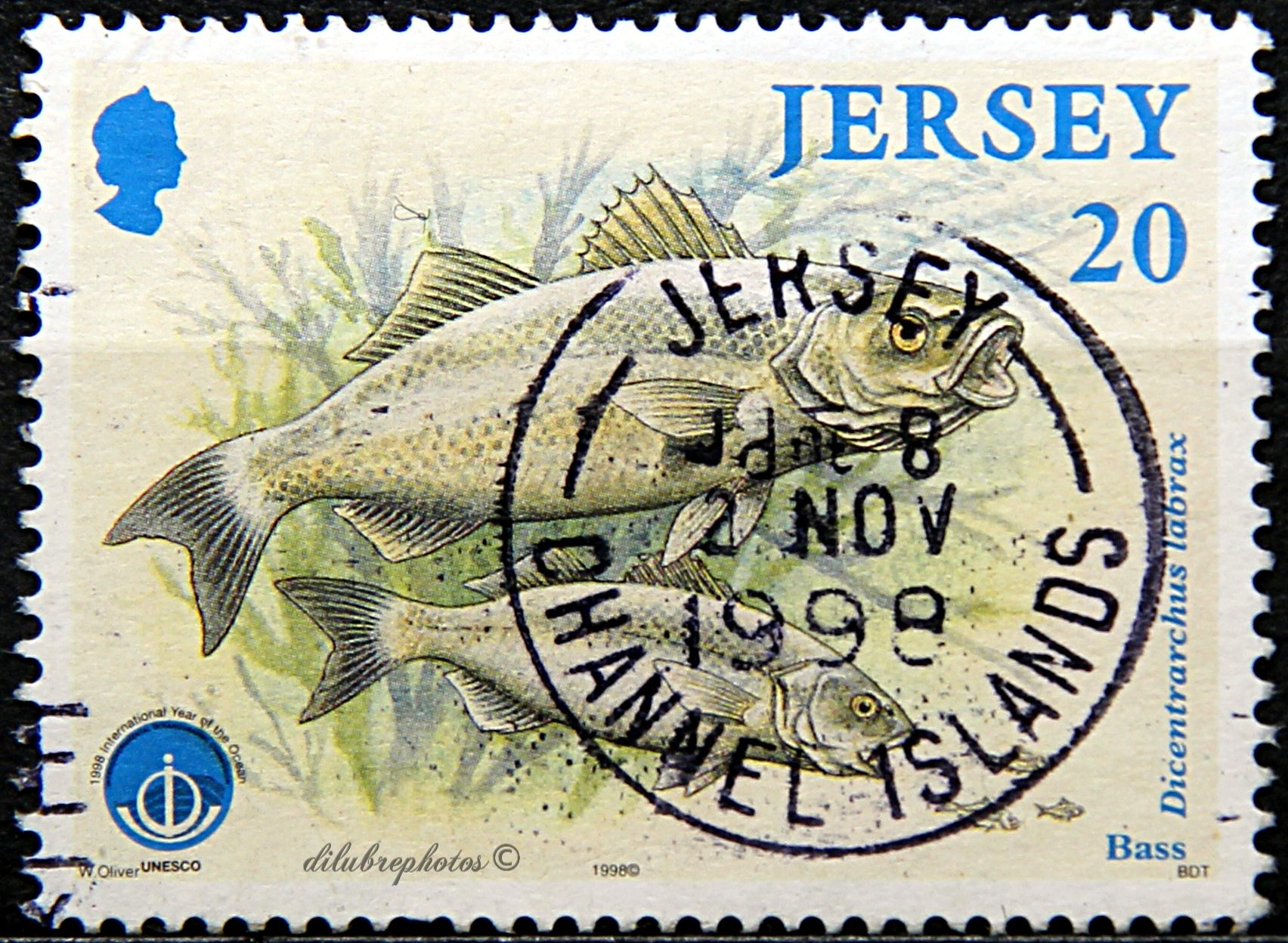 Jersey.  MARINE LIFE, INTERNATIONAL YEAR OF THE OCEAN.  BASS.  Scott 858 A171, Issued 1998 Aug 11, Perf. 15 x 14 1/2, Lutho., 20. /ldb.