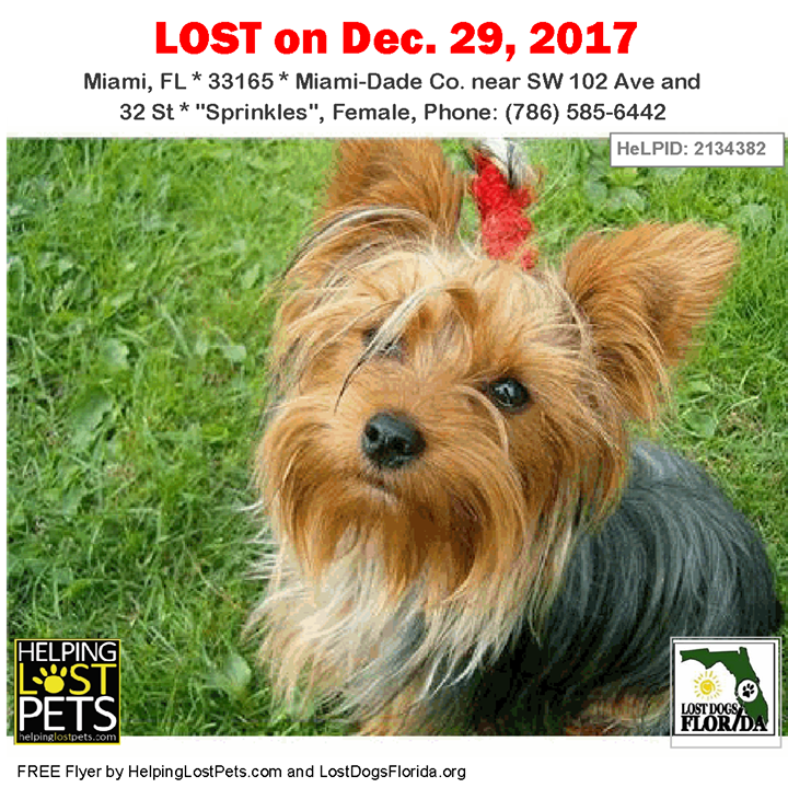 Have You Seen This Lost Dog Lostdog Sprinkles Miami Sw 102