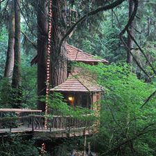 Treehouse Point B B Near Seattle So Want To Go Sometime