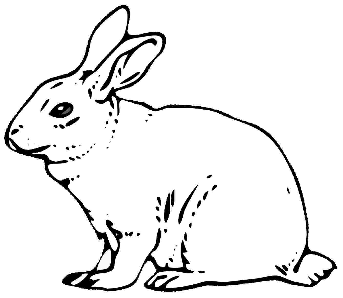 Coloring Pages Rabbits Coloring Pages Breadedcat Free Printable