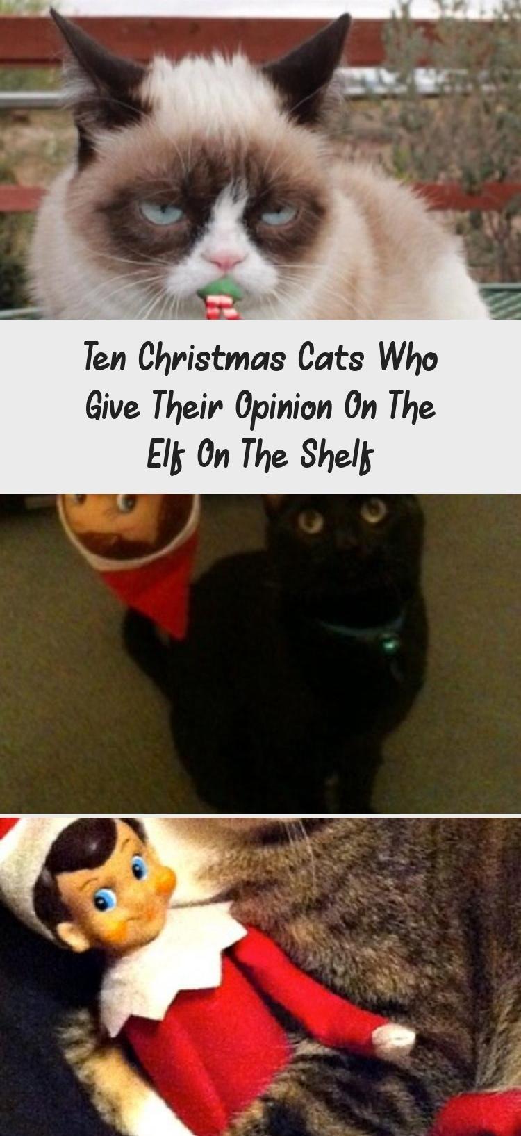 My Blog En Blog in 2020 Christmas cats, Cat quotes