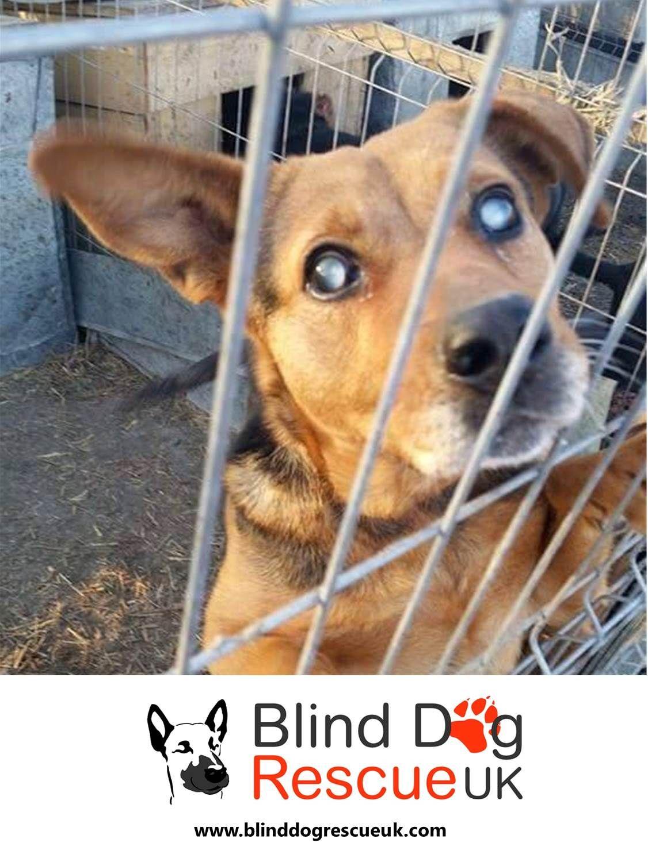 Adopt A Blind Dog Dog Rescue Uk Dogs Blind Dog