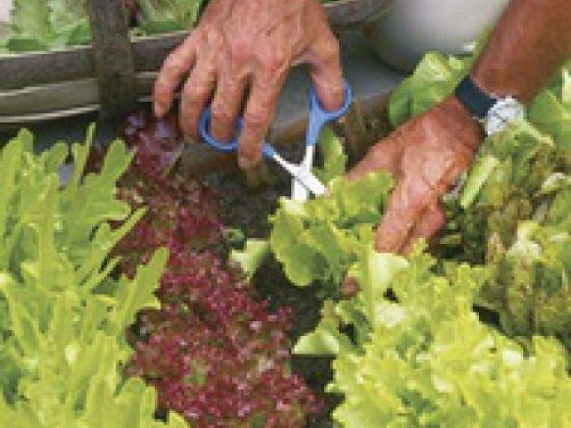 Consider These Heat, Drought Tolerant Vegetables for your Garden | Edina, MN Patch