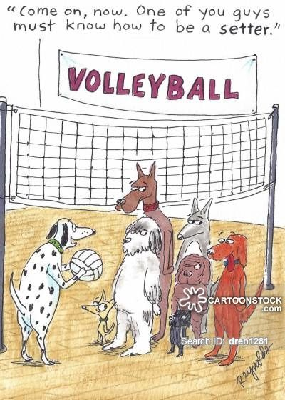 https://s3.amazonaws.com/lowres.cartoonstock.com/animals-pet-dog-volleyball-volleyball_player-volleyball_game-dren1281_…