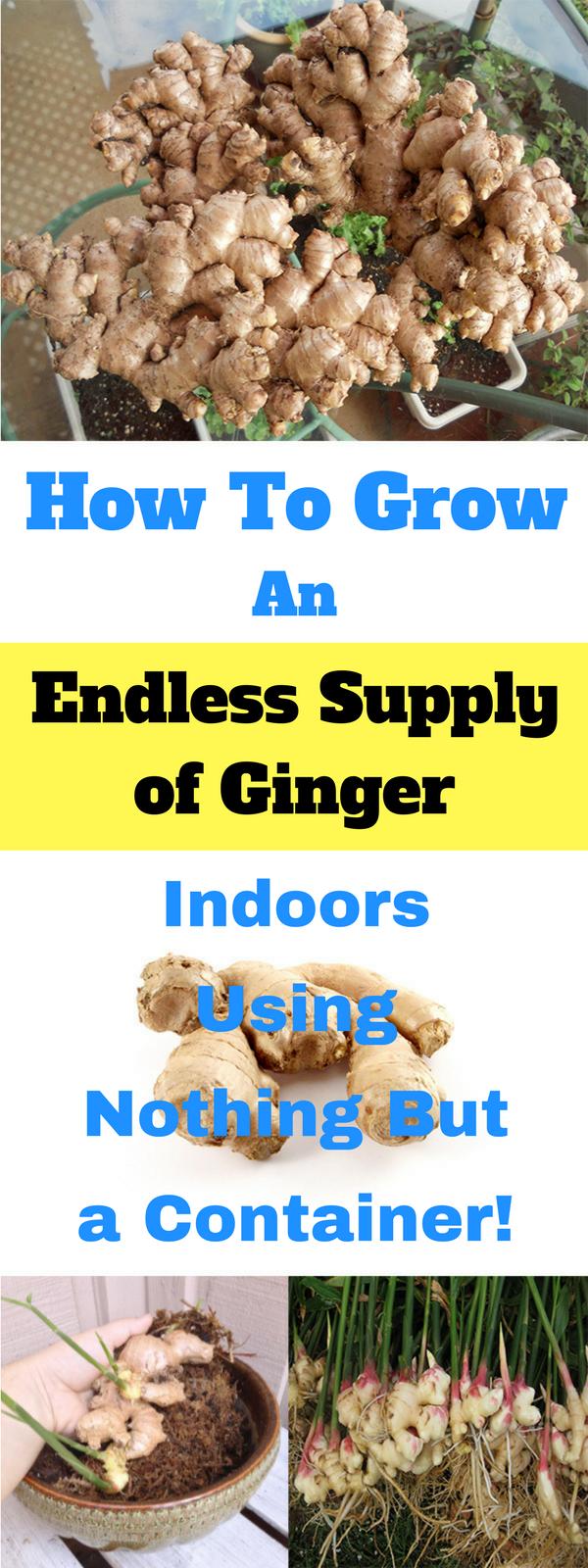 How To Grow G*Ng*R Indoors Indoor Vegetable Gardening 400 x 300