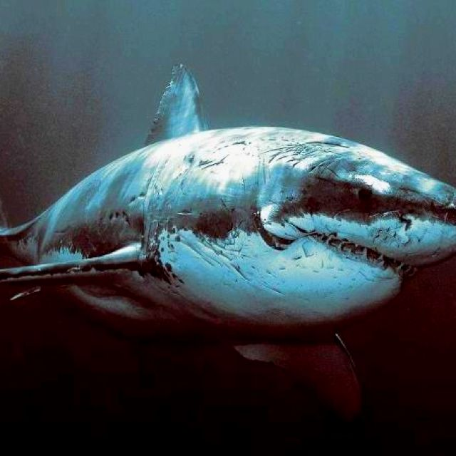 What a beautiful smile | My Love | Pinterest | Tiburones, Animales y ...