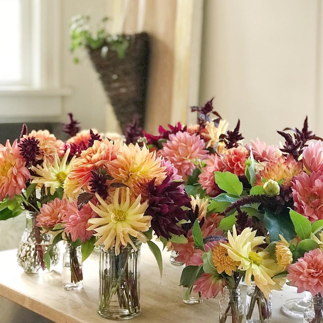 Dahlias and Amaranth Zinnias, Dahlia, Flowers
