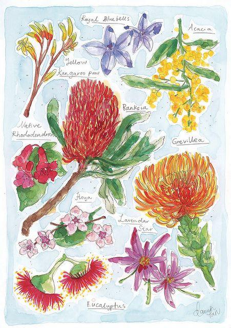 Native Flowers Australian Native Flowers Australian Flowers Flower Drawing