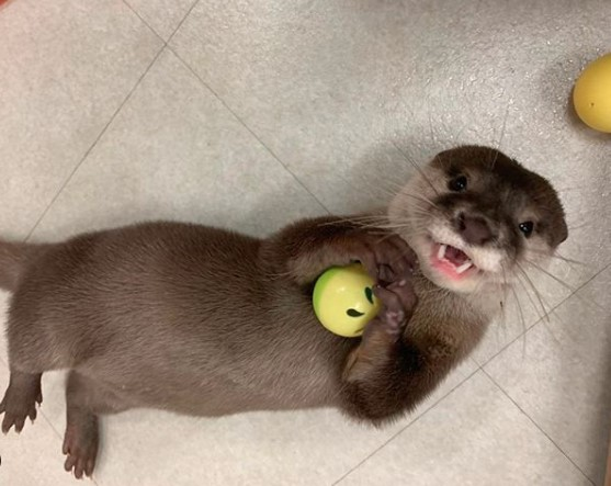 Pin By Mystic Girl On Otters In 2020 Otters Cute Otters Cute Animals