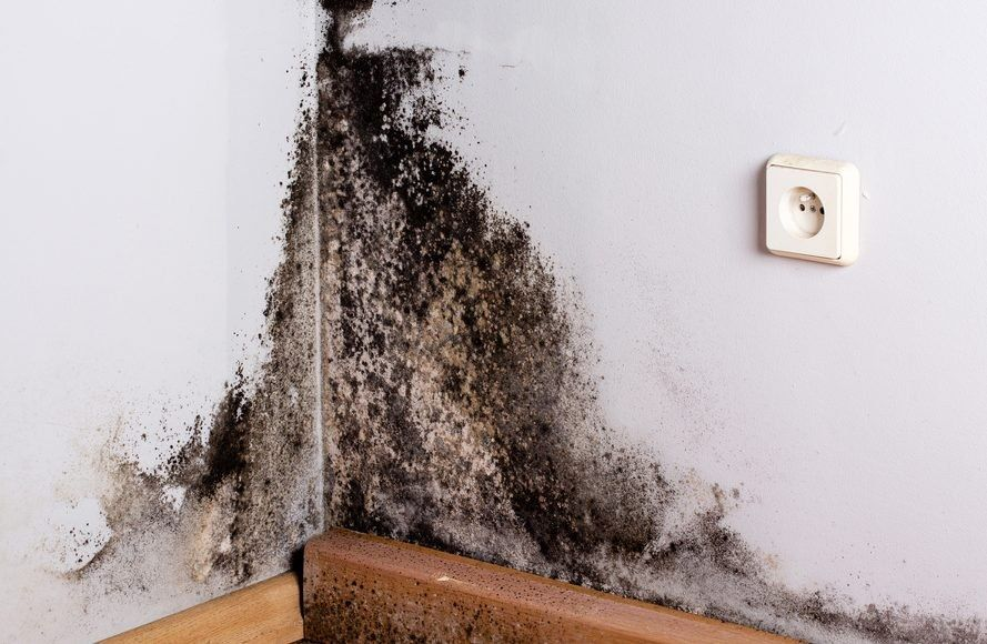 What Everyone Needs To Wear Before They Enter A Home With Mold