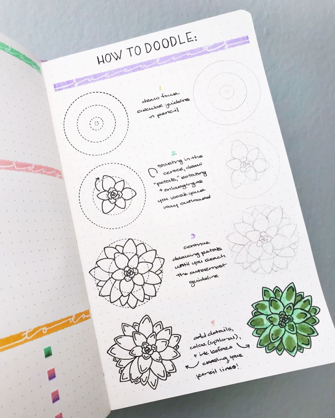 Succulent Doodles | How to Draw Succulents Step by Step — Sweet PlanIt