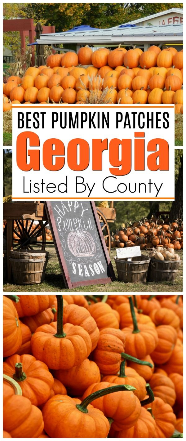 Looking for the best pumpkin patches in This is a