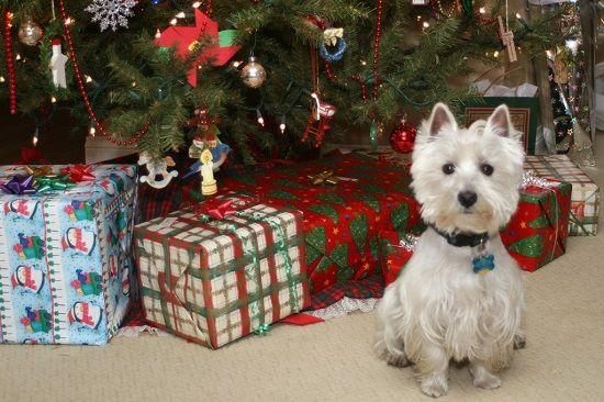 Christmas Wishes For My Dog To Enjoy Christmas Animals