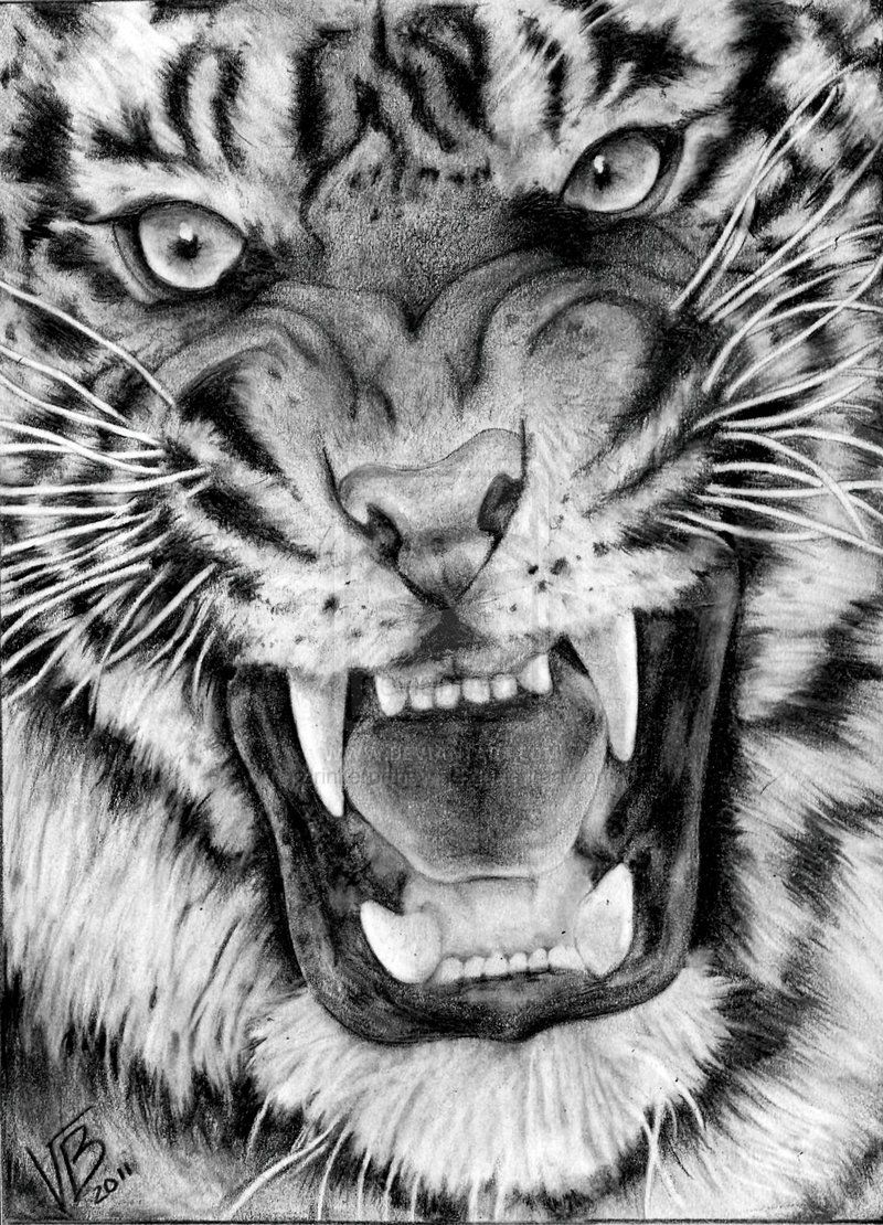 snarling tiger by drinkerofthewind deviantart com on deviantart