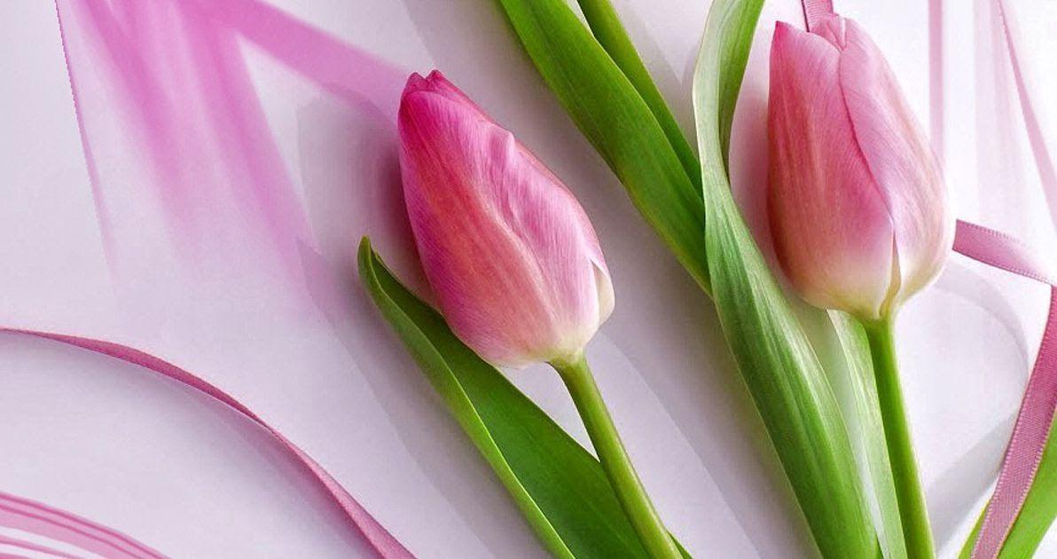 Wallpaper 3d Bunga Tulip Background Nature Wallpaper Design Valoblogi Com Cari Terbaik Bunga Tulip Wallpaper Produsen Dan Di 2020 Bunga Tulip Bunga Wallpaper Bunga