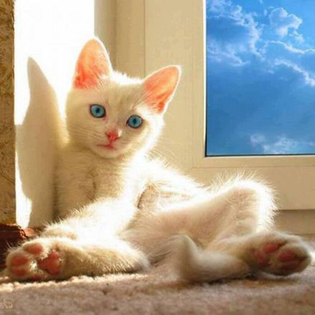 Top 30 Cats And Kittens Pics Kitten Pictures Pets Cats Cats