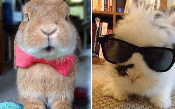 Os dois coelhinhos tem um Instagram só, @Charity Pilkinton. Além das fotos comuns, eles sempre aparecem com algum acessório, tipo óculos de sol ou laços. Duvido que alguém resista!