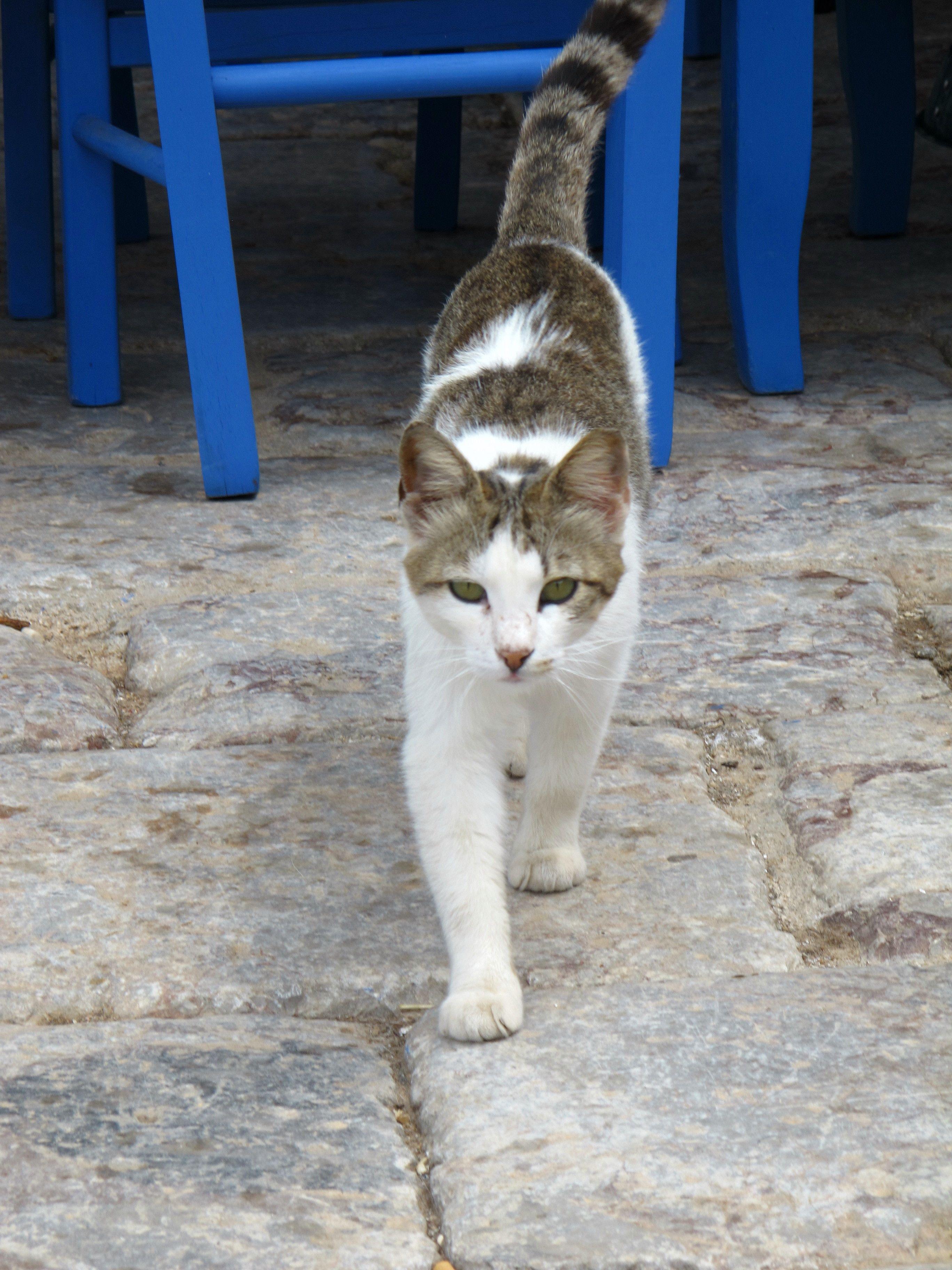 Greek Cat.. Corfu travel guide by Corfu2travel.com