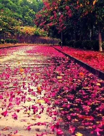 Beautiful Flowers Scenery Beautiful Scenery Amazing Flowers