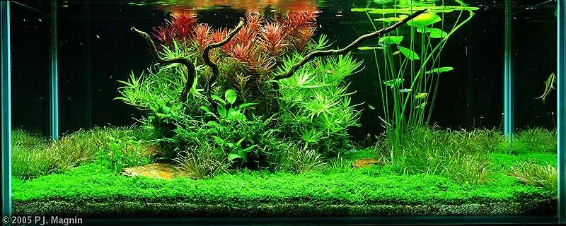 zen garden aquascapes aquariums pinterest aquarium nature rh pinterest com