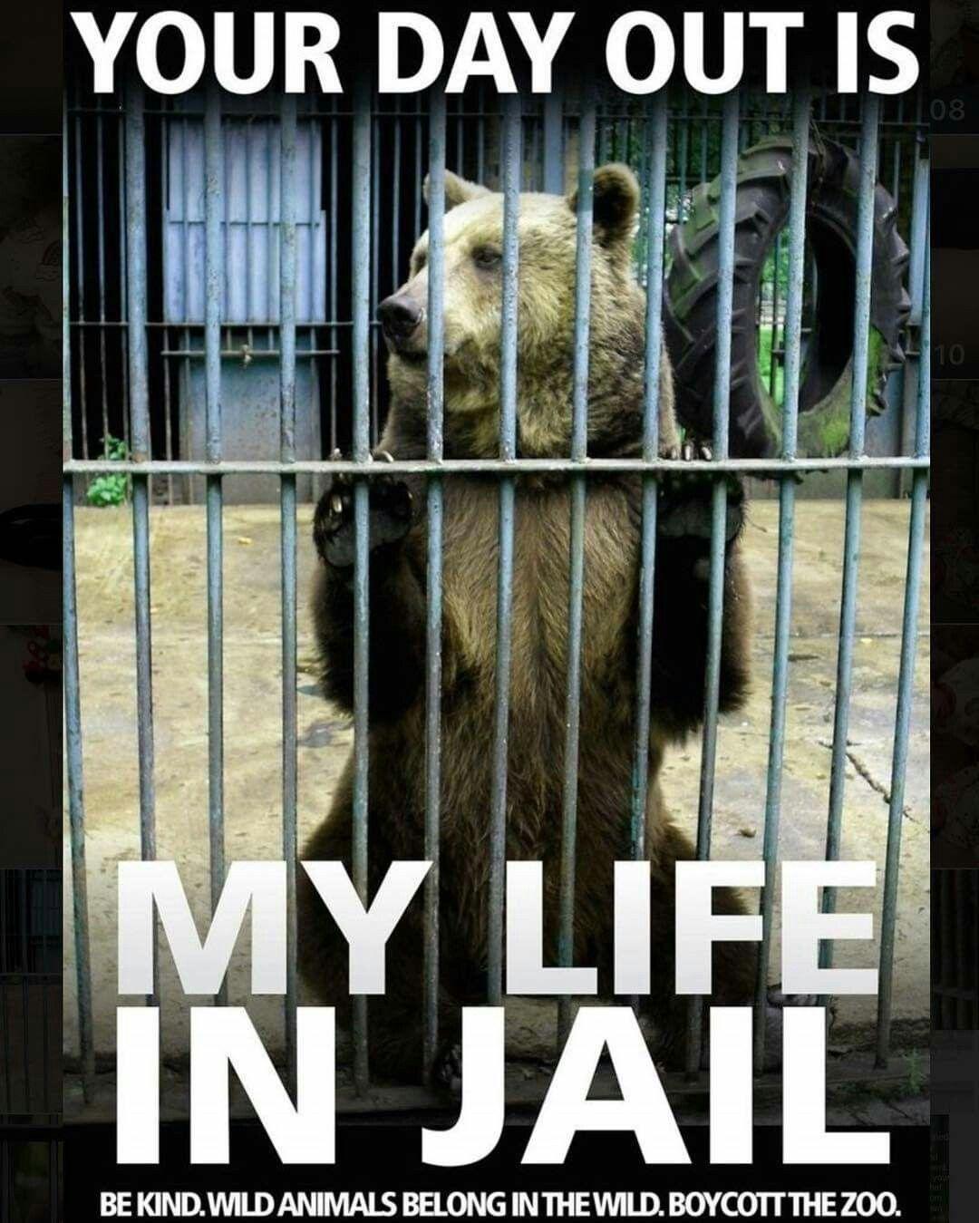 Boo Zoo Animal Quotes Animal Help Animals Wild