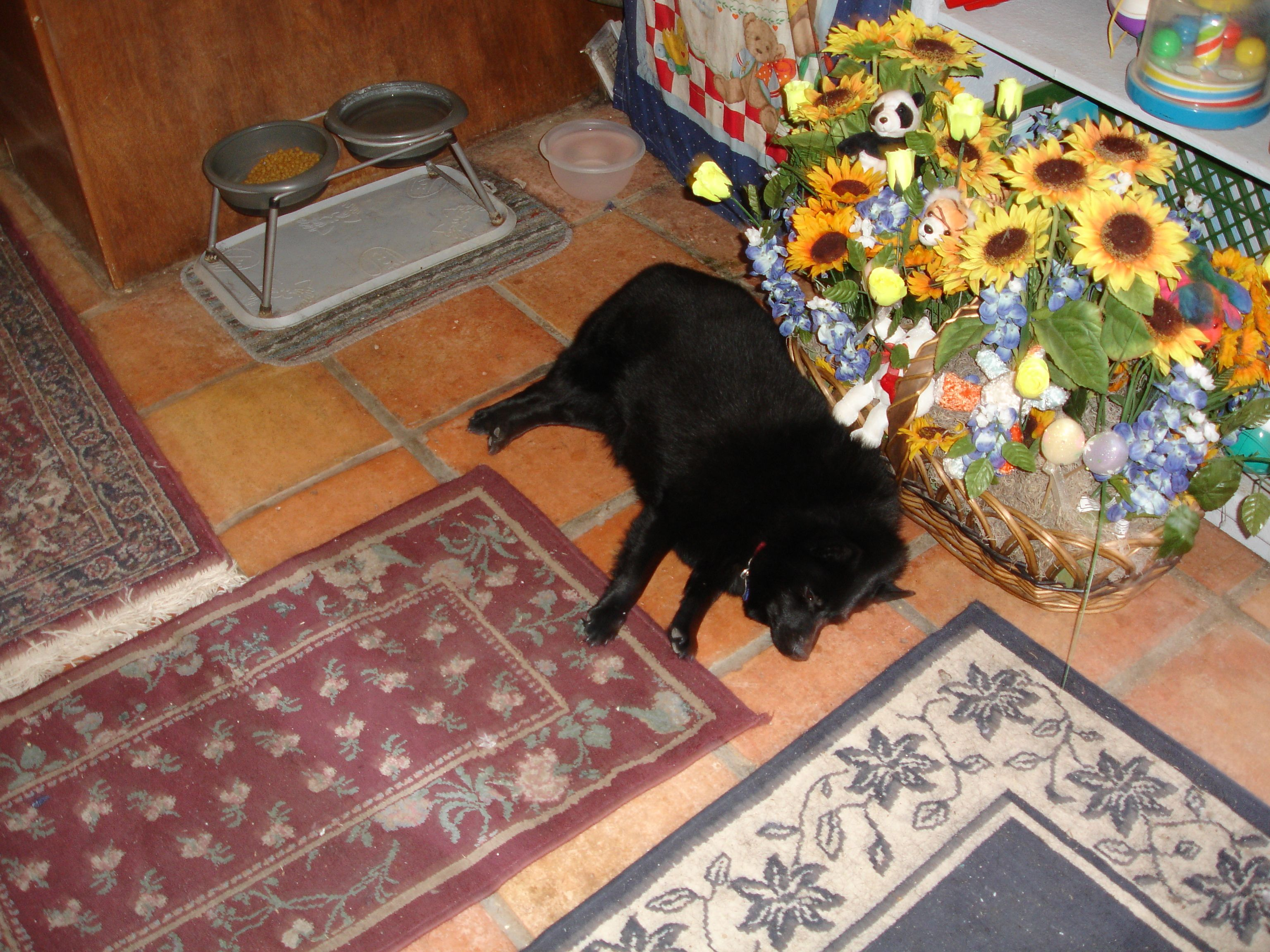 My baby laying by the flowers after my son died baby was