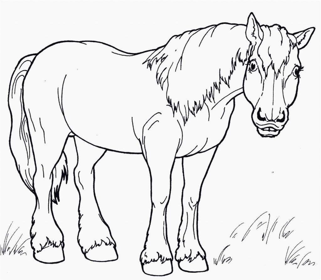 malvorlage liegendes pferd  tiffanylovesbooks