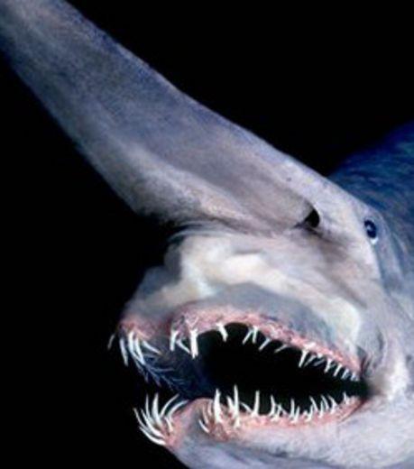 Requin lutin aniamux dans l 39 eau pinterest requin - Requin rigolo ...