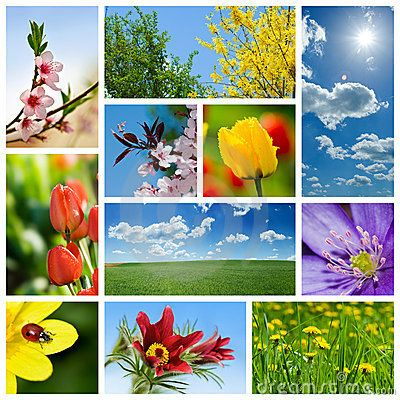 Spring collage | Flower collage, Beautiful collage, Color collage