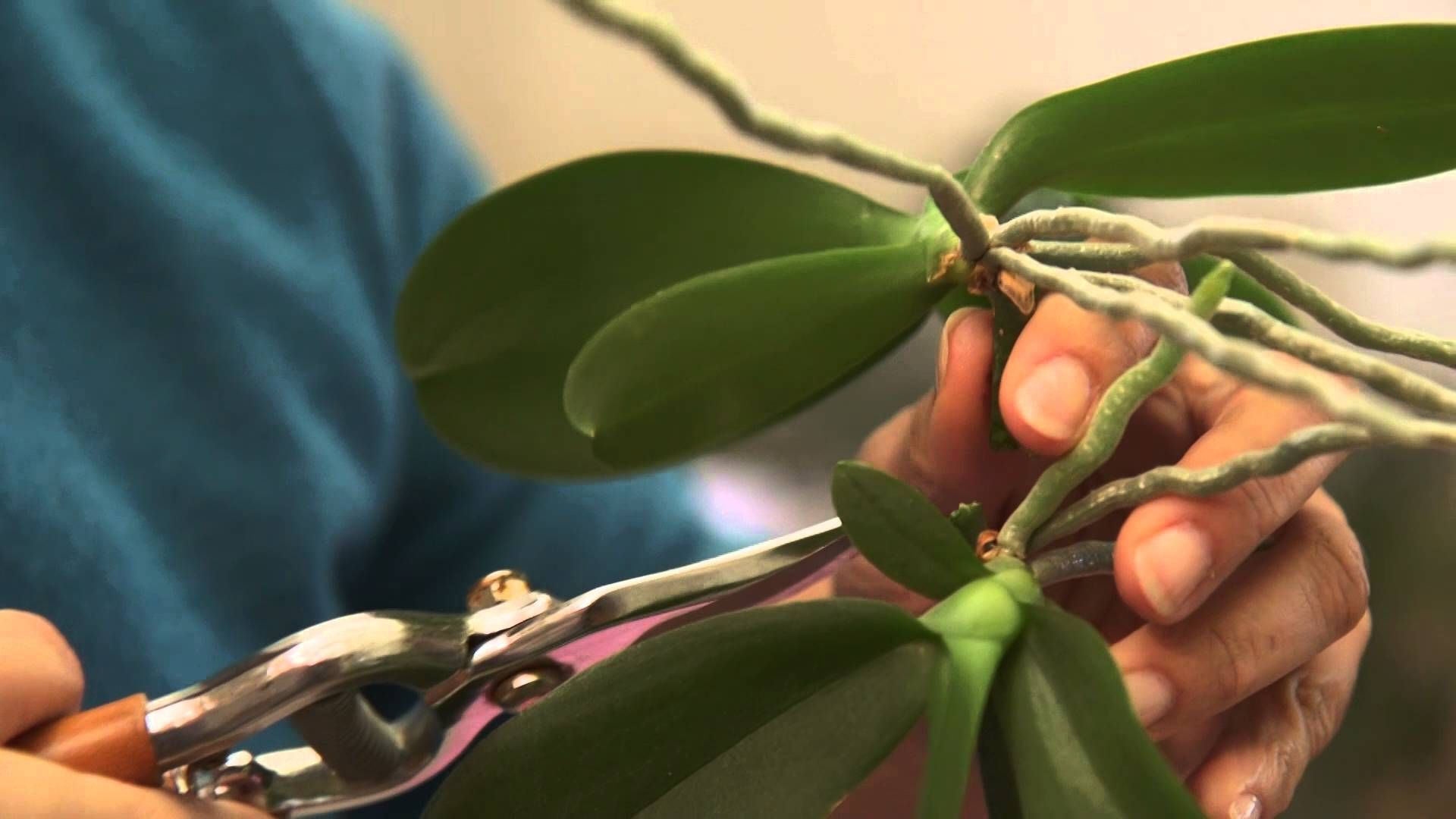 Comment Bouturer Les Orchidees Jardinage Et Deco Pinterest