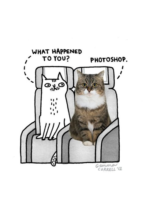 Photoshoped cat    Sky Cats for Open Skies - The Design Issue