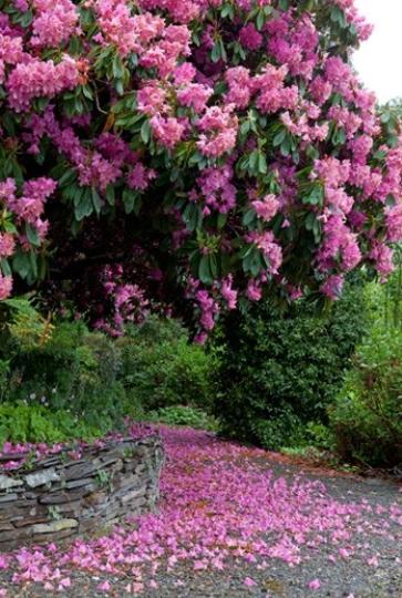 Accent On Design Plants Beautiful Gardens Flower Garden
