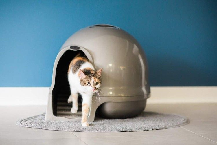 These Specialty Litter Boxes Were Made With Older Cats In Mind Bustle Best Cat Litter Litter Box Pet Mat