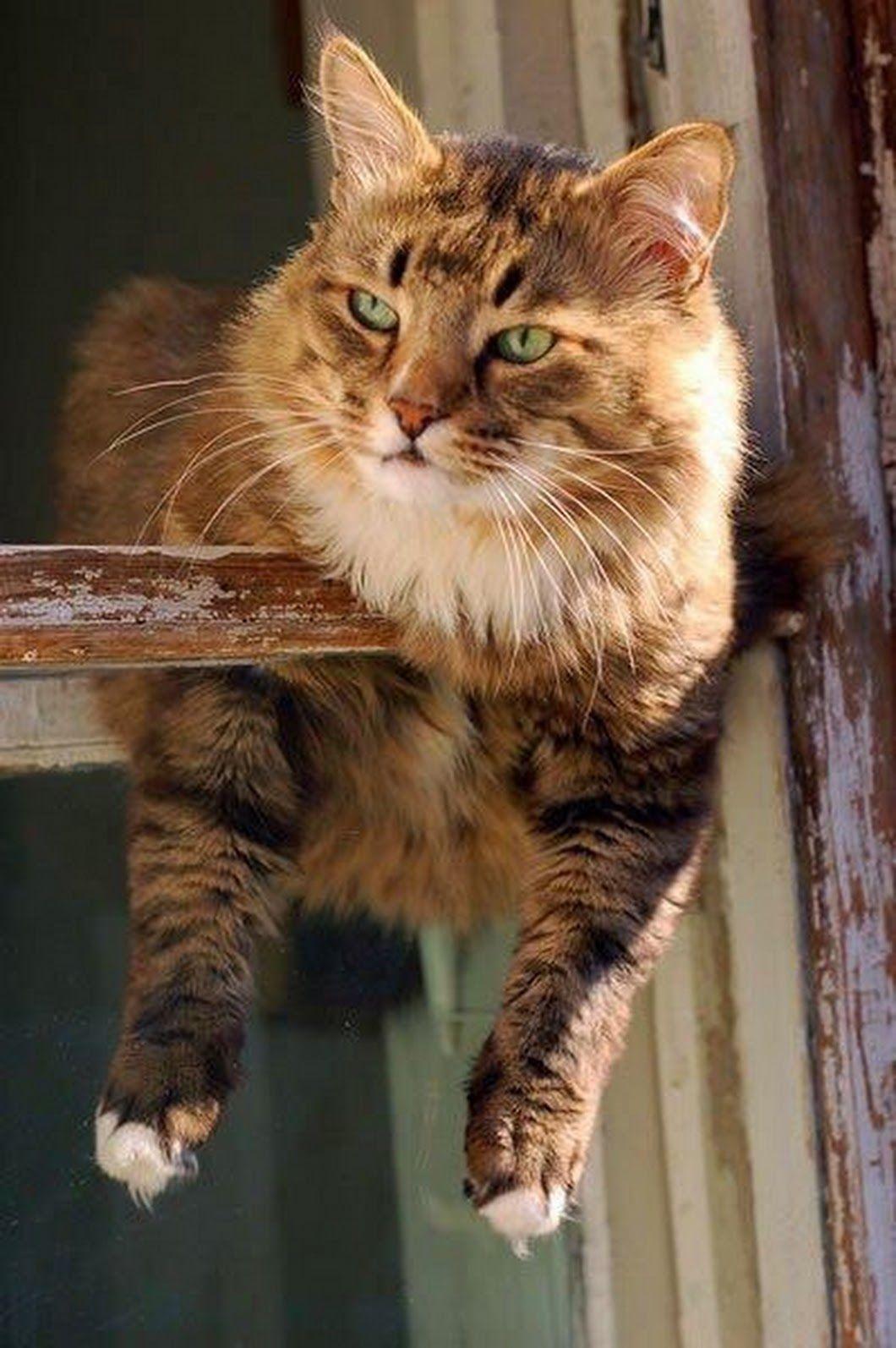 Ольга Beautiful cats, Pretty cats, Crazy cats