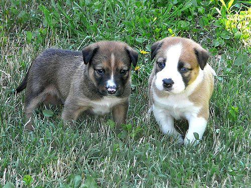 Cool Animal Dog Images Http Q Gs 7ozr8 Puppy Socialization Pets Embrace Pet Insurance