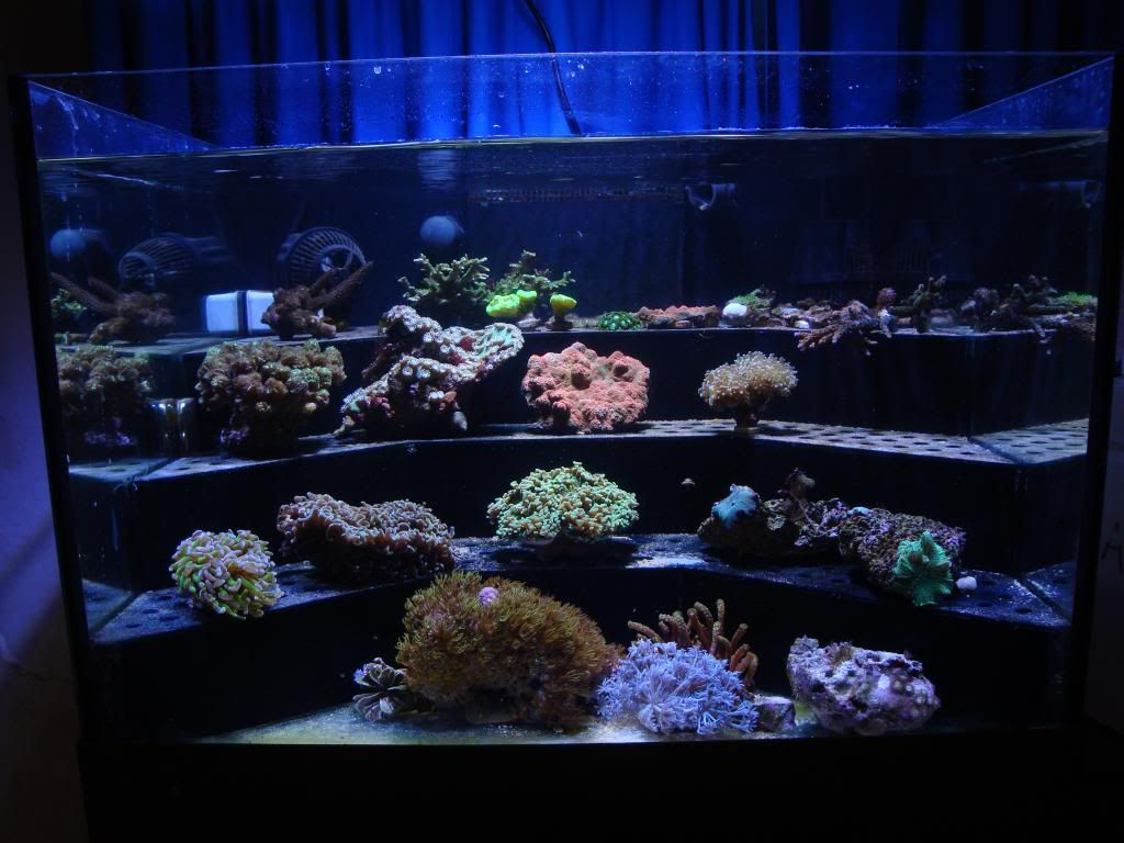 Small Coral Frag Rack