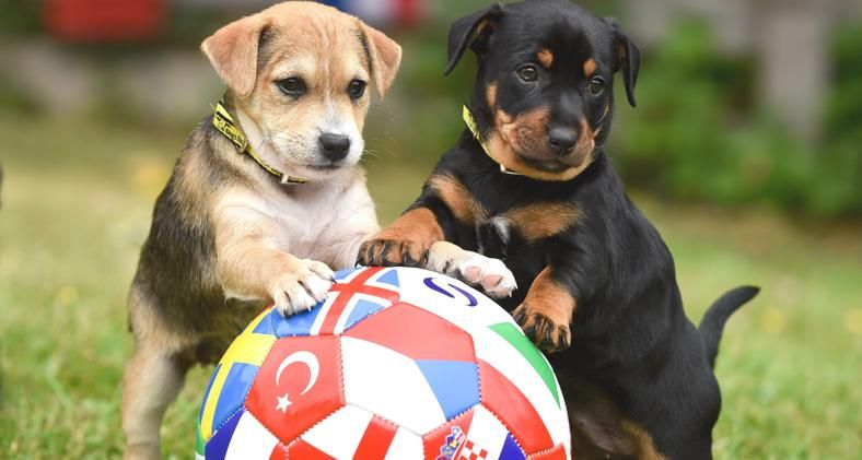 Adorable puppies looking to win perfect match at the 'furr'-opean championships - Dogs Trust