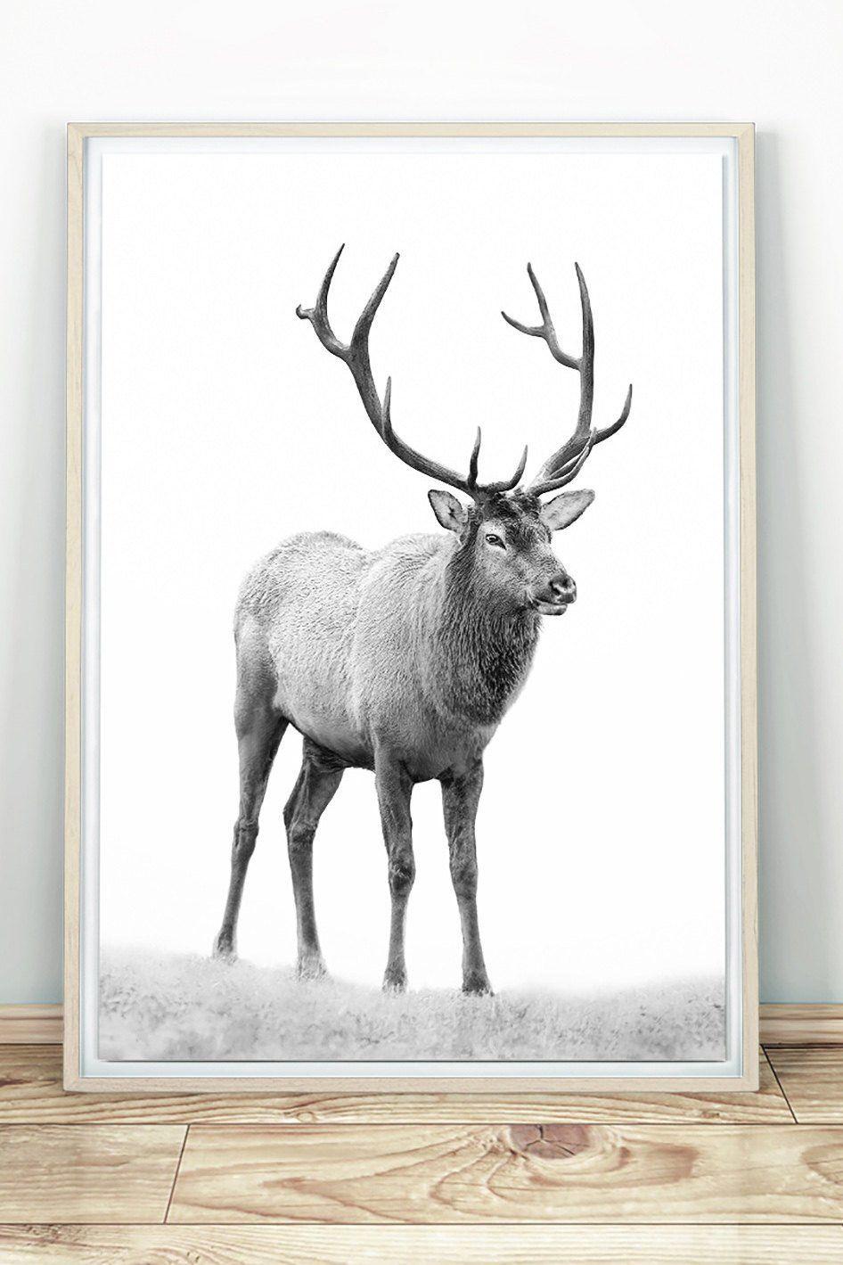 Deer Print Black And White Elk Printable Stag Wall Art Deer Etsy Deer Wall Art Deer Photography Art