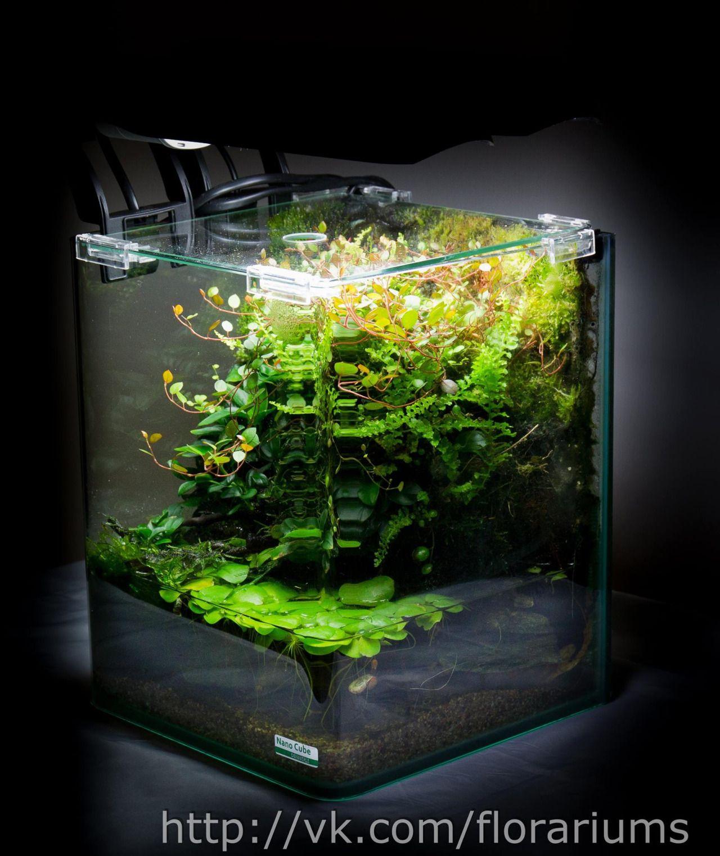 Simonsaquascapeblog Aquascape Aquascape Aquarium Planted Aquarium
