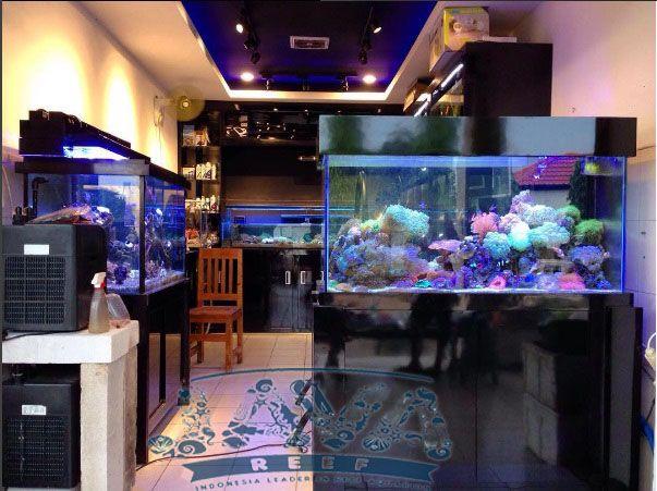 Toko Aquarium Air Laut Di Jakarta Barat Aquarium Lautan Air