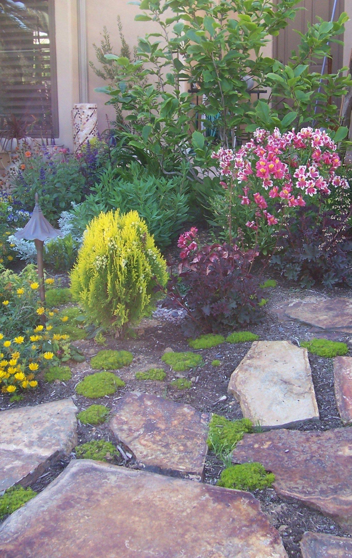 backyard-landscape-design-xeriscape-san-diego | Landscape ...