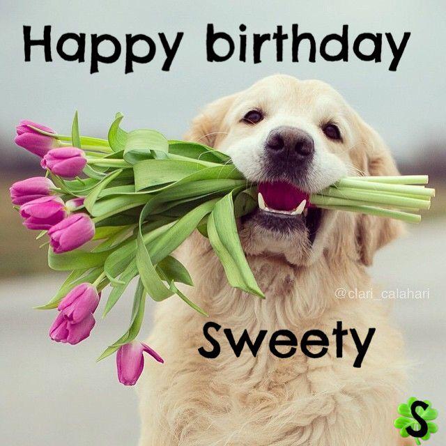 The Best Happy Birthday Memes Cani E Amici Pinterest Buon