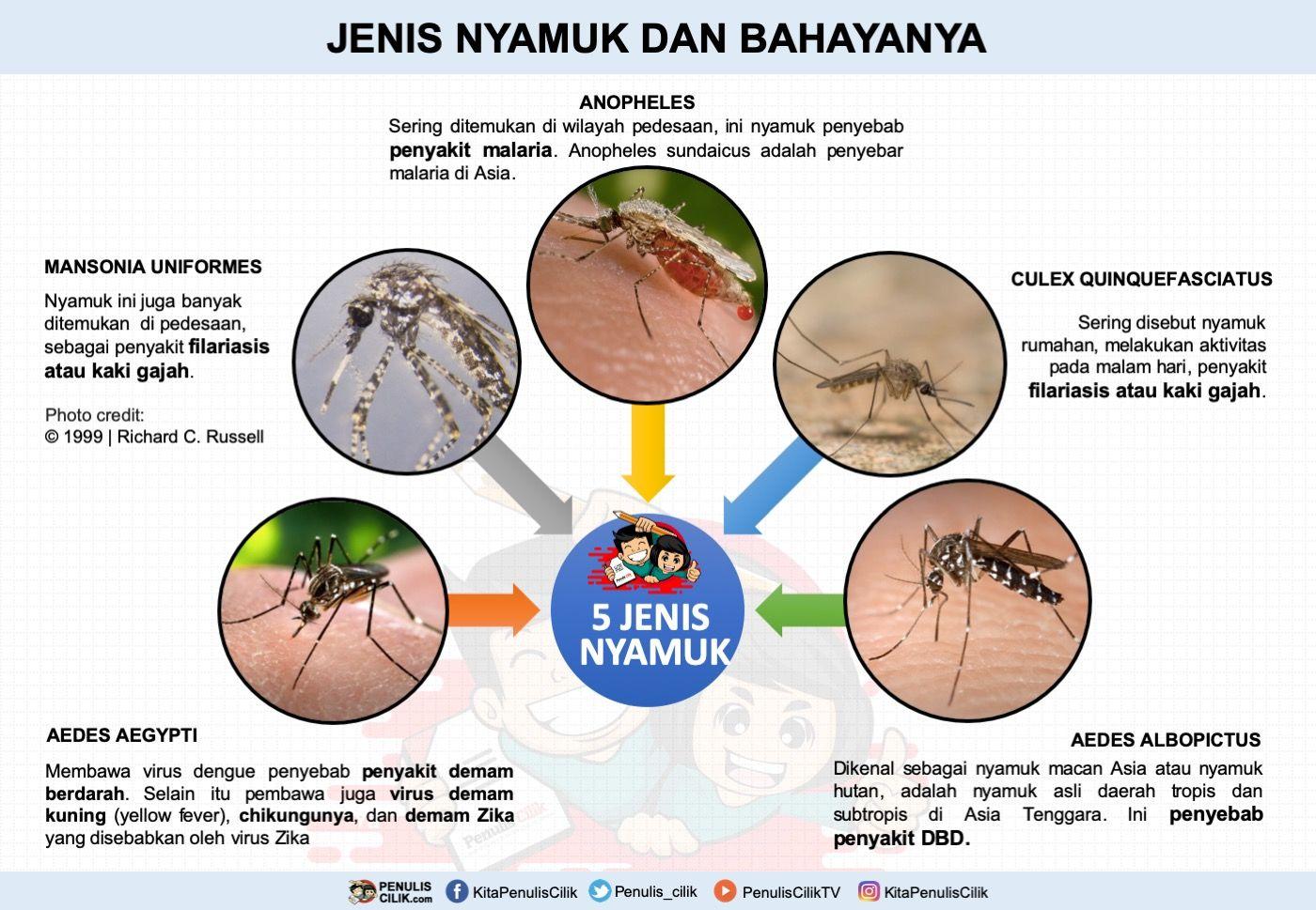 5 Jenis Nyamuk Dan Bahayanya Gambar Poster Poster Chart Diagram