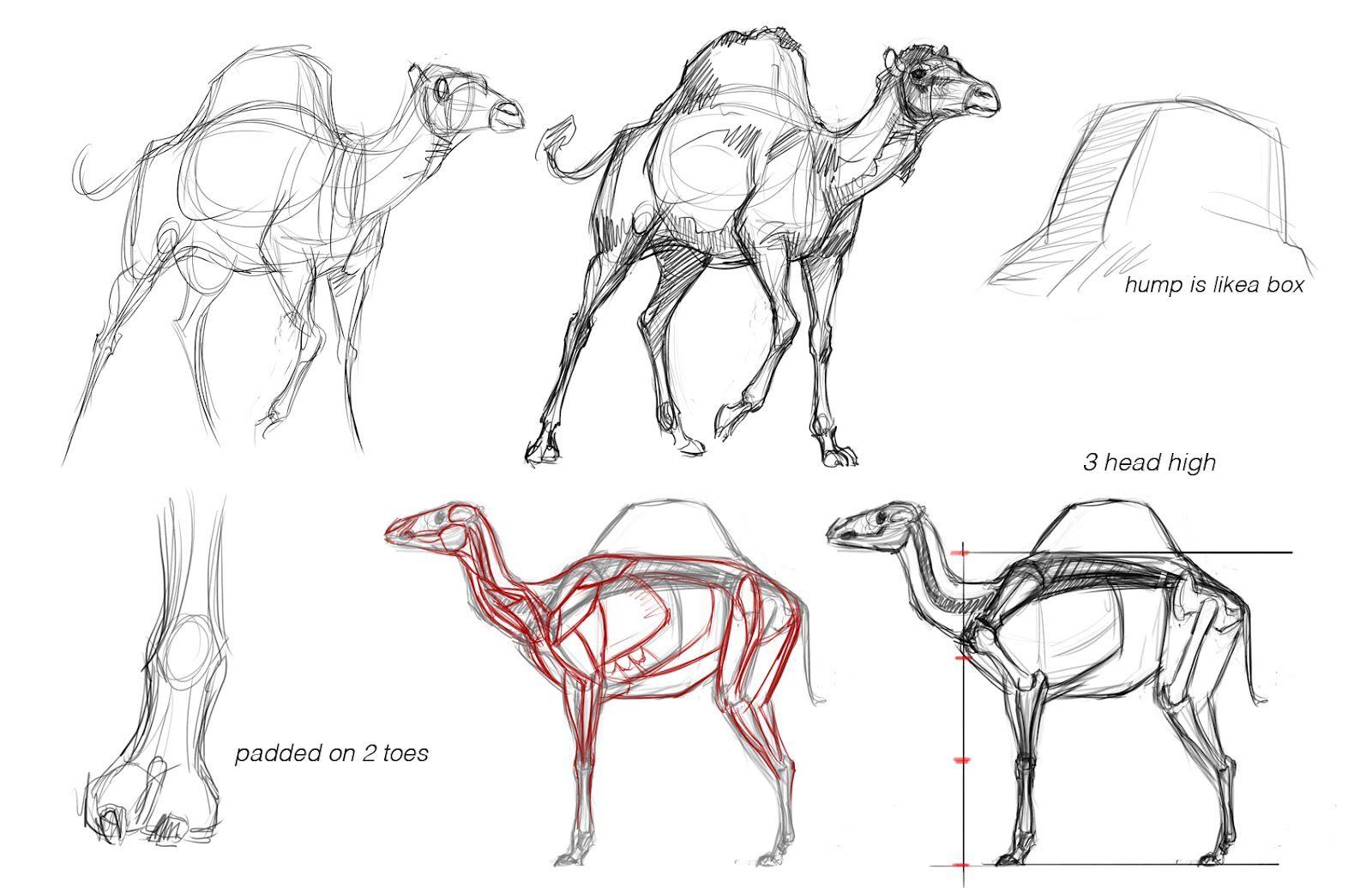 27 best camel drawings illustration images on pinterest camels