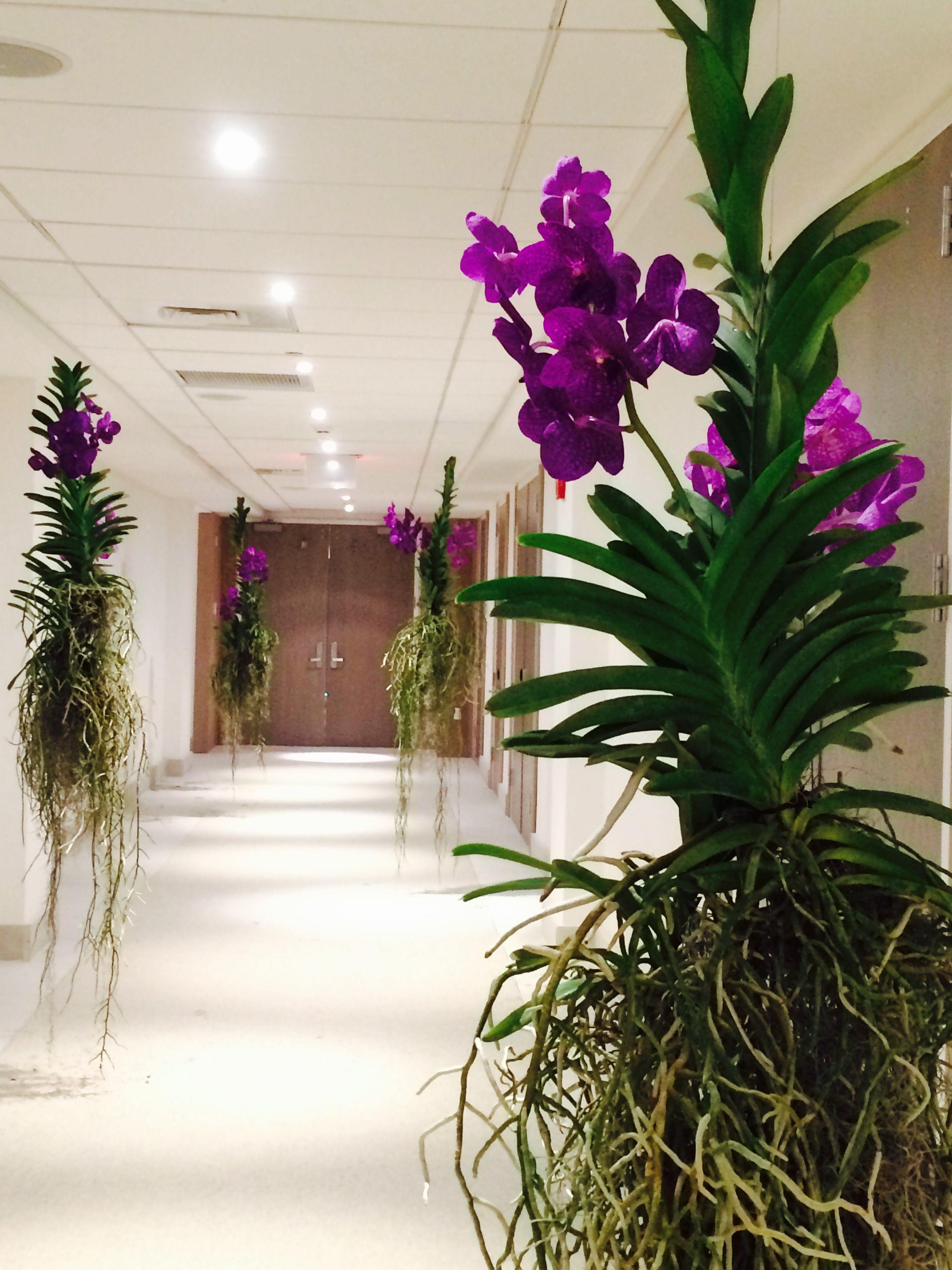Цветы в майами купить, цветов